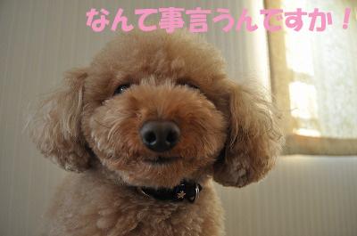 DSC_0003のコピー.jpg